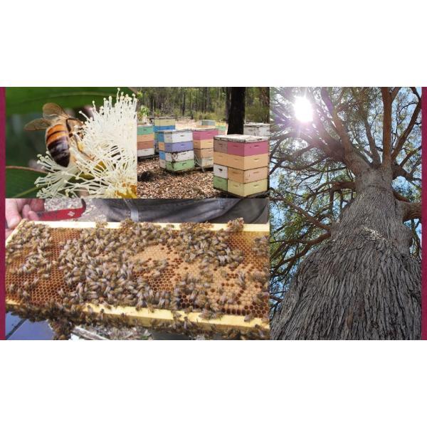 初回限定お試し はちみつ マリーハニー TA35+ 150g プレミアム アクティブ マリーハニー オーストラリア産 蜂蜜|hands|08