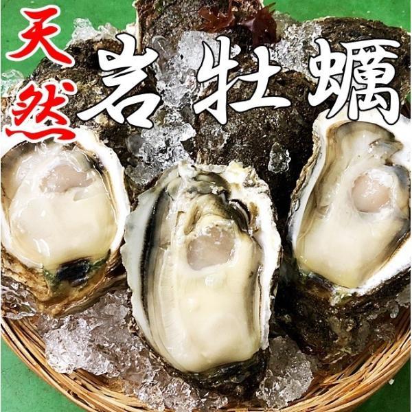 岩牡蠣 天然 日本海産 小10個 1.6〜1.9k 生食用 カラ割り 殻付き 送料無料 岩がき 岩ガキ お中元 ギフト 贈答 バーベキュー