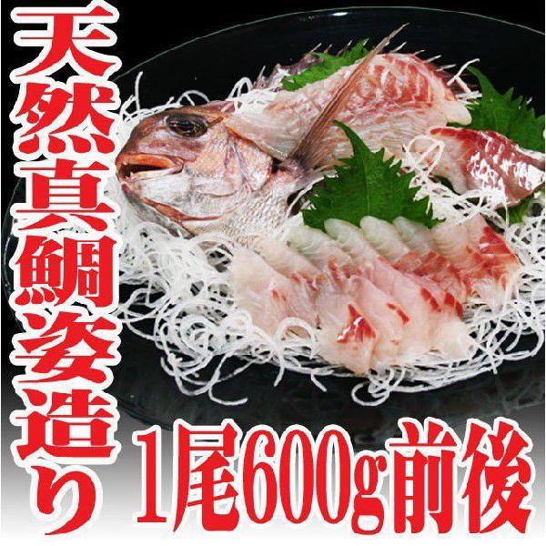 豪華 山形県産 天然真鯛 姿造り600g前後 刺身 生食用 マダイ