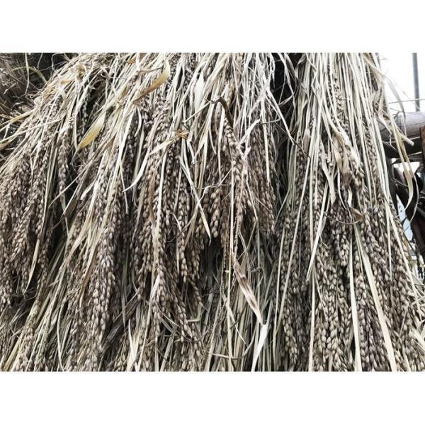 雑穀パック 黒米 古代米 2パック(200gx2) わたなべ農園 国産 山形県産 送料無料|heartlandfarm|04