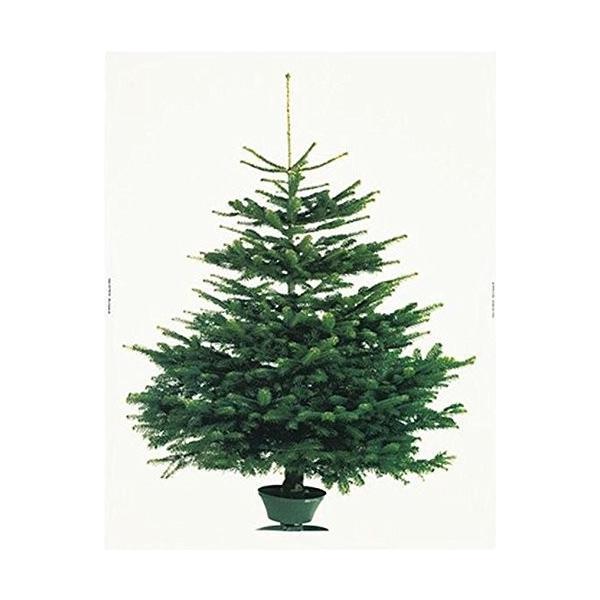 イケア クリスマス ツリー タペストリー もみの木 壁面 大型 パネル 特大|hello-2017|04