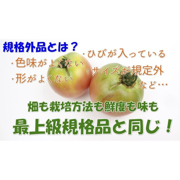 トマト桃太郎1kg送料無料 訳あり規格外品 岡山びほく産|hey-com-bicchu|03