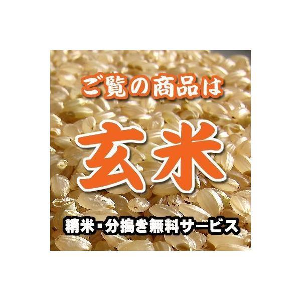 宮城産 つや姫 玄米 1kg
