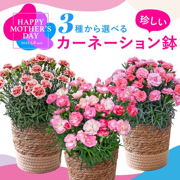 母の日ギフト 選べるカーネーション鉢 日比谷花壇