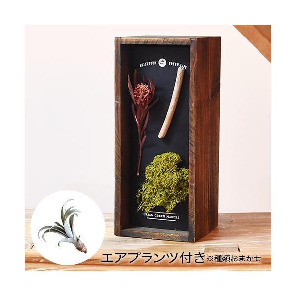 日比谷花壇 観葉植物  URBAN GREEN MAKERS ハーバリウム ウッドボックス「ビーチ」インテリアキット