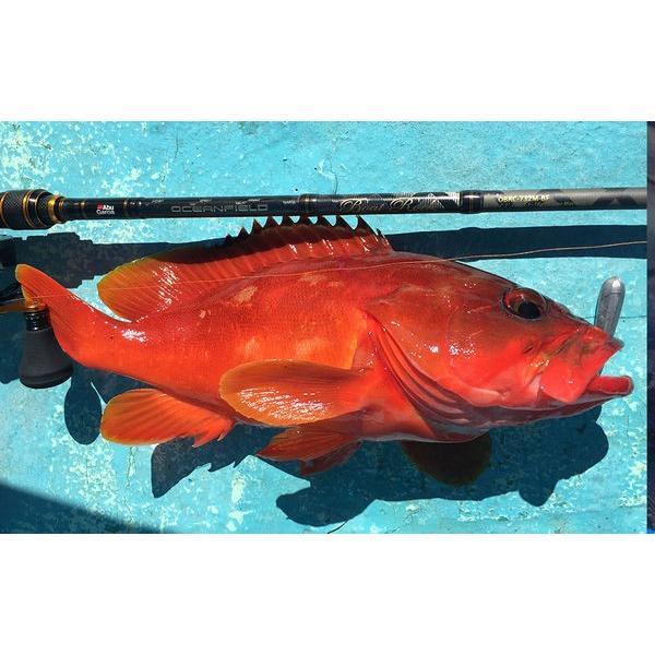 アブガルシア ロッド スピニングモデルオーシャンフィールド ボートロック OBRS-682L (0036282957763) Abu Garcia OCEANFIELD BOAT ROCK