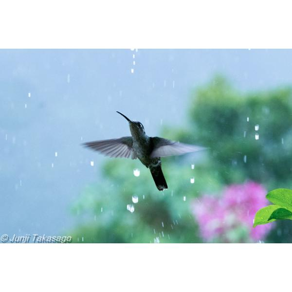 PLANET OF WATER hkt-tsutayabooks 02
