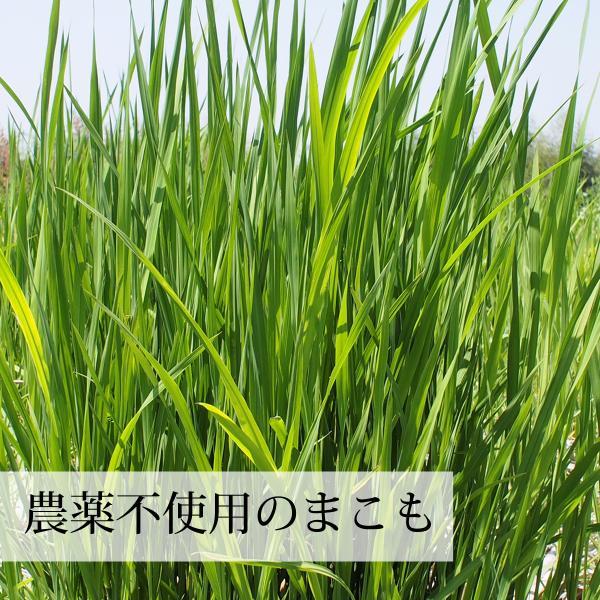 国産まこも若葉粉末200g 真菰パウダー マクロビオティック 農薬不使用 マコモ 青汁 マコモダケ まこもたけ hl-labo 05