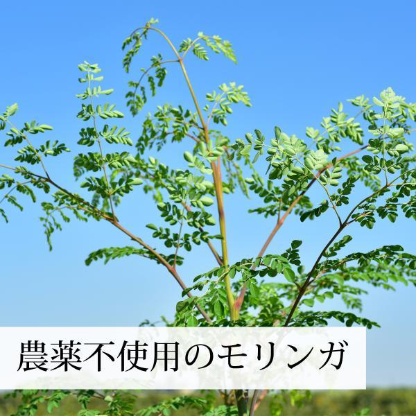 モリンガ青汁粉末 100g×2個 農薬不使用 無添加 100% フィリピン産 スーパーフード ミラクルツリー|hl-labo|05