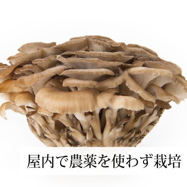 国産まいたけ粉末300g×2個 乾燥 舞茸パウダー 茶 農薬不使用 ベータグルカン mdフラクション 無農薬|hl-labo|05
