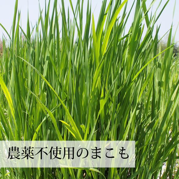 送料無料 国産まこも若葉粉末100g 真菰パウダー マクロビオティック 農薬不使用 マコモ 青汁 マコモダケ まこもたけ|hl-labo|05