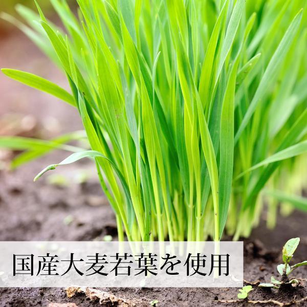 送料無料 国産大麦若葉粉末2g×30本 無添加 100% 便利なスティック包装 青汁スムージー、野菜ジュース、食物繊維不足に 無農薬|hl-labo|03