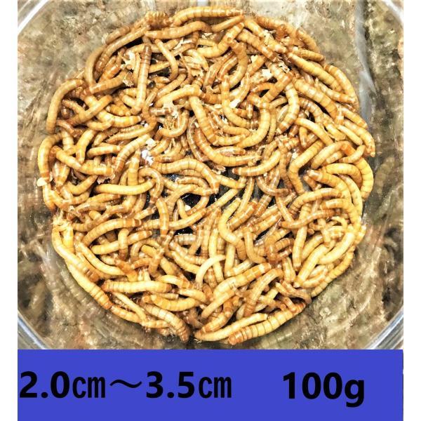  ミルワーム 200匹 送料無料 2cm〜3.5cmサイズ(レターパックプラス)