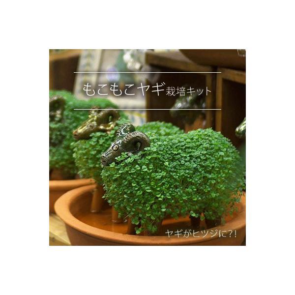 自分で育てるもこもこヤギ 栽培キット チアシード 園芸 おしゃれ かわいい インテリア エクステリア ガーデニング 自由研究