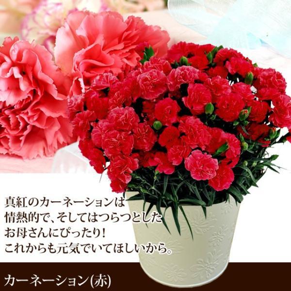母の日 ギフト 2019 選べる鉢植え&スターバックス&フォンダンショコラ / カーネーション 鉢花 hokkaido-gourmation 02