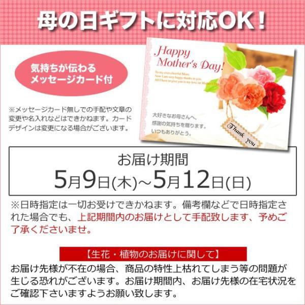 母の日 ギフト 2019 選べる鉢植え&スターバックス&フォンダンショコラ / カーネーション 鉢花 hokkaido-gourmation 05