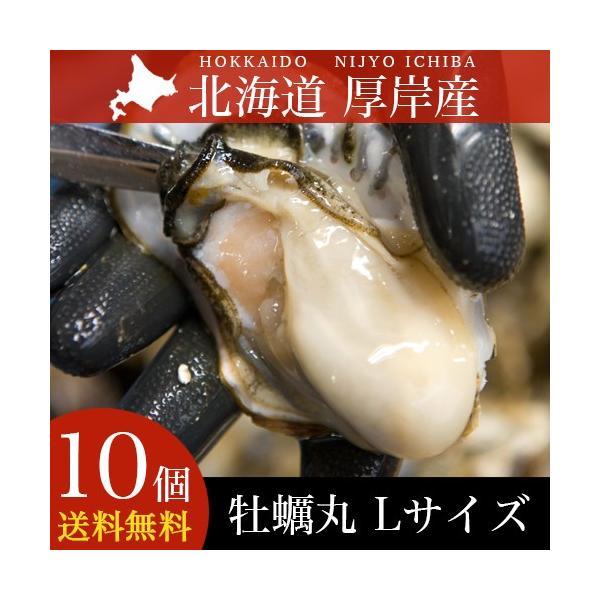 母の日 海鮮 ギフト 牡蠣 北海道産 厚岸産 牡蠣丸(カキマル) Lサイズ 10枚 生食用 殻付き (軍手、牡蠣ナイフ、剥き方説明書付き)|hokkaido-gourmation