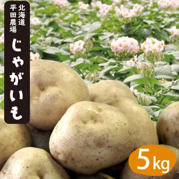 予約受付中 じゃがいも 送料無料 北海道旭川 平田農場のじゃがいも(とうや・男爵・キタアカリ・メークイン)Lサイズ 5kg / 産地直送