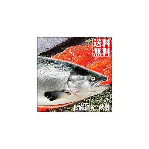 予約受付中 送料無料 北海道産 さけ 秋鮭(メス)筋子付き 3.5kg / 北海道沖産 鮭 サケ さけ 旬の味覚 魚 しゃけ 水揚げ 海鮮 水産