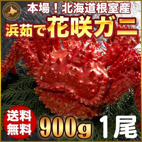 敬老の日 ギフト 2017 花咲ガニ 900g × 1尾 希少な 花咲ガニ 北海道産 蟹|hokkaido-marche