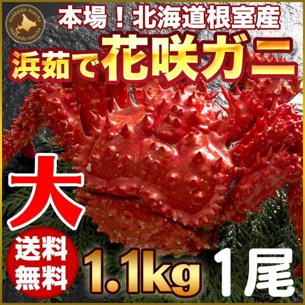 敬老の日 ギフト 2017 花咲蟹 1.1kg × 1尾 希少な 花咲蟹 北海道産 蟹|hokkaido-marche