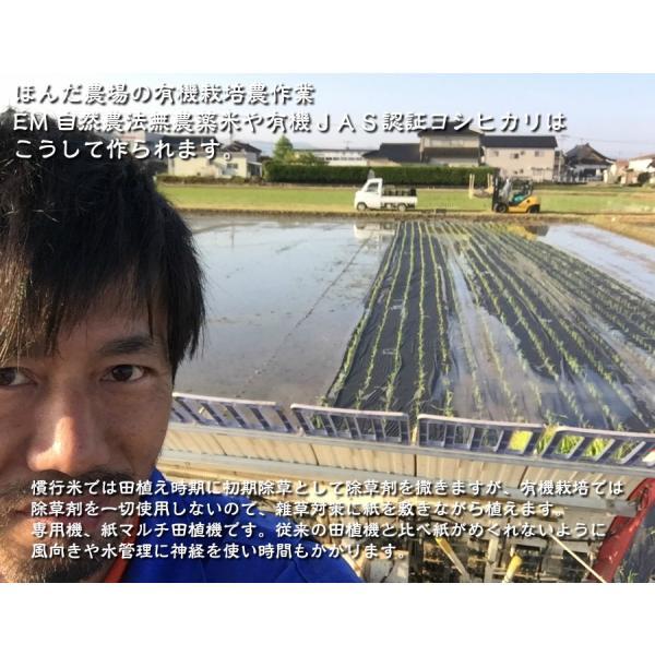 お米 玄米 白米 無洗米 無農薬 有機米ができるまでEM自然農法 紙マルチ田植え