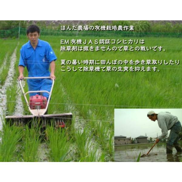お米 玄米 白米 無洗米 無農薬 有機米ができるまでEM自然農法 除草作業
