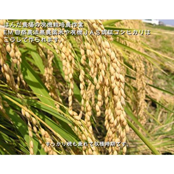 お米 玄米 白米 無洗米 無農薬 有機米ができるまでEM自然農法 稲 稲穂 収穫