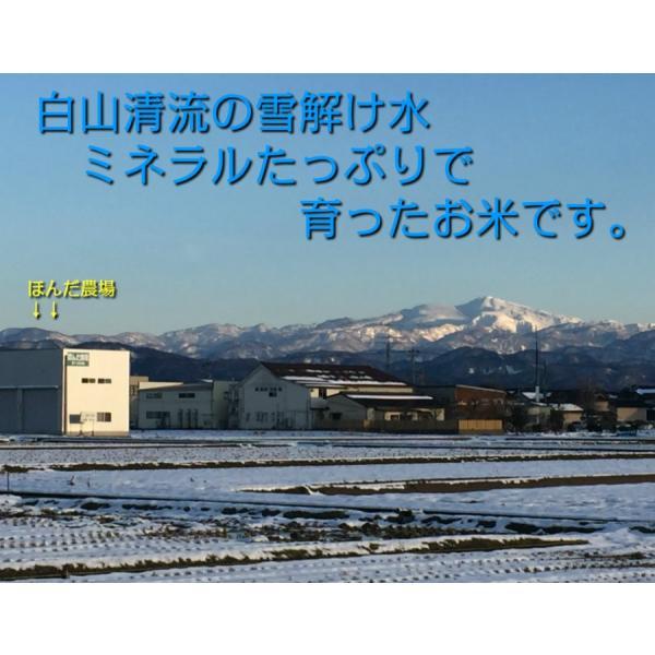 お米 玄米 白米 無洗米 無農薬 霊峰白山からのきれいな水と無農薬で育てた有機栽培米