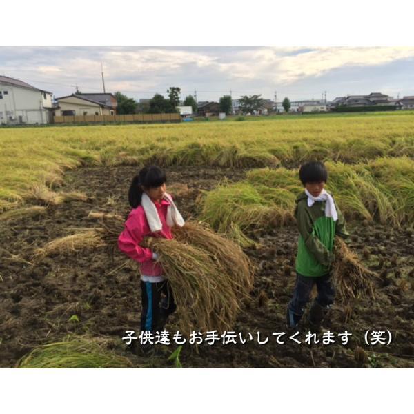 有機米ができるまでEM自然農法 天日干し コシヒカリ にゅう積み こども