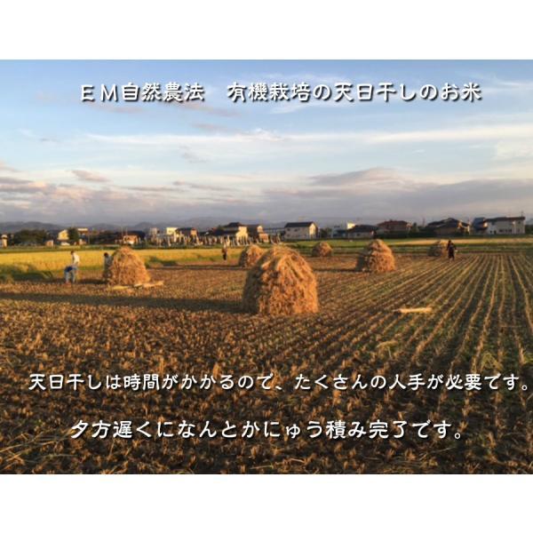 有機米ができるまでEM自然農法 天日干し コシヒカリ にゅう積み