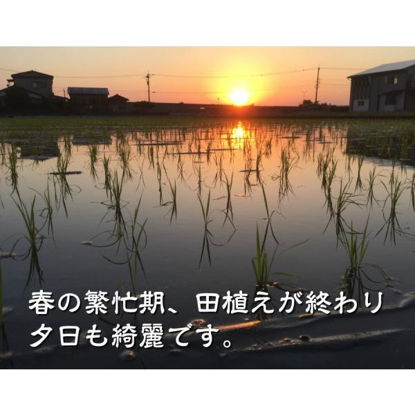 有機米ができるまでEM自然農法 田植えあと夕日
