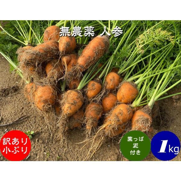 無農薬 EM農法 わけあり 人参 小ぶり 【葉っぱ付き】泥付き(にんじん)1袋 1kg