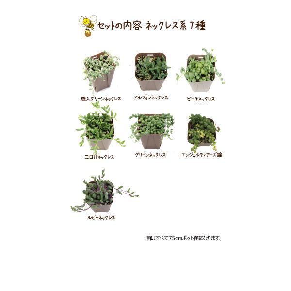 多肉植物 ネックレス系7種セット|honeymint|02