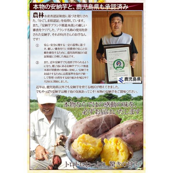 今だけお試し さつまいも 安納芋 送料無料 訳あり 鹿児島 種子島産 無選別 2kg 焼き芋や干し芋にも|honmamonya|04