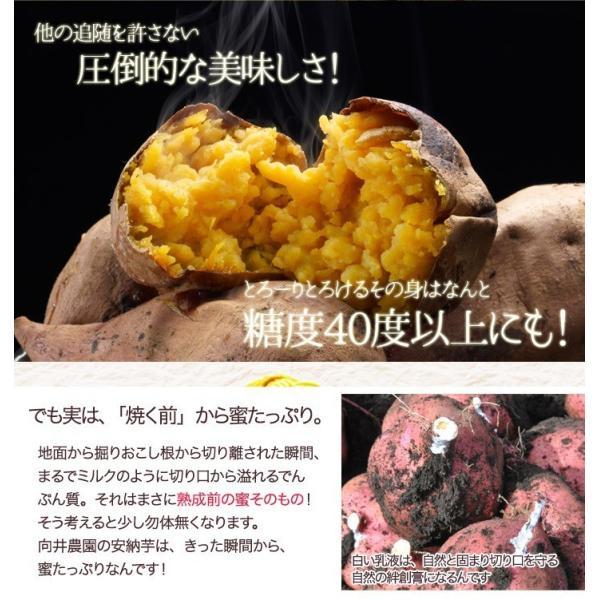 今だけお試し さつまいも 安納芋 送料無料 訳あり 鹿児島 種子島産 無選別 2kg 焼き芋や干し芋にも|honmamonya|06