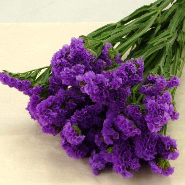 スターチス チース リモニウム 切花 生花 切り花 5本 箱売り 造花ではありません お色おまかせ