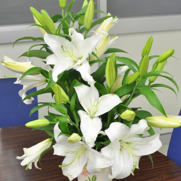 ハイブリッドユリ HBユリ 白 切花 生花 切り花 1本 造花ではありません