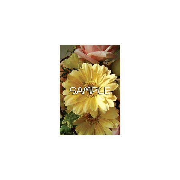 花のポストカード ガーベラ(黄色)|horiya-studio|02