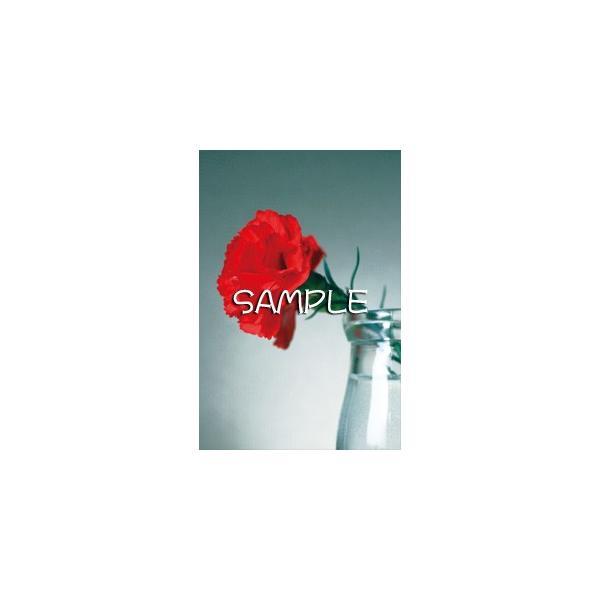 花のポストカード カーネーション(赤)|horiya-studio|02