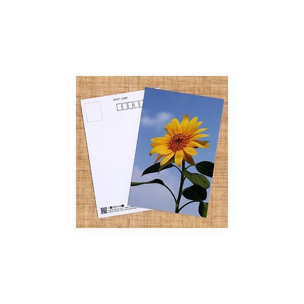 花のポストカード ヒマワリ|horiya-studio
