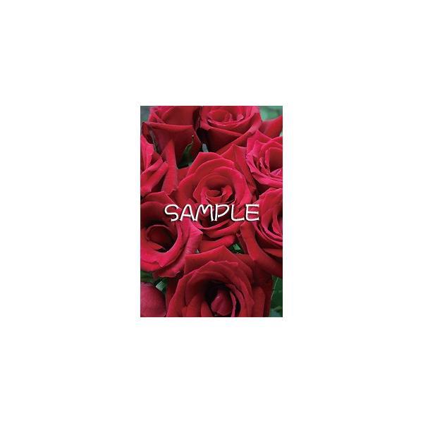 花のポストカード バラ(赤)|horiya-studio|02