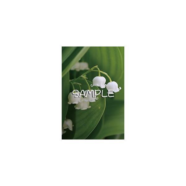 花のポストカード スズラン|horiya-studio|02