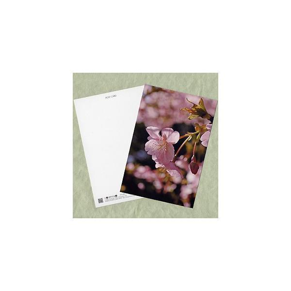 花のポストカード サクラ(ピンク)2|horiya-studio