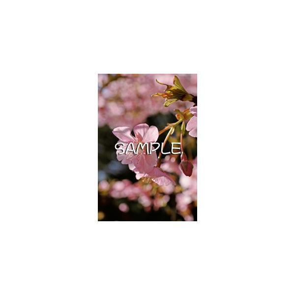 花のポストカード サクラ(ピンク)2|horiya-studio|02