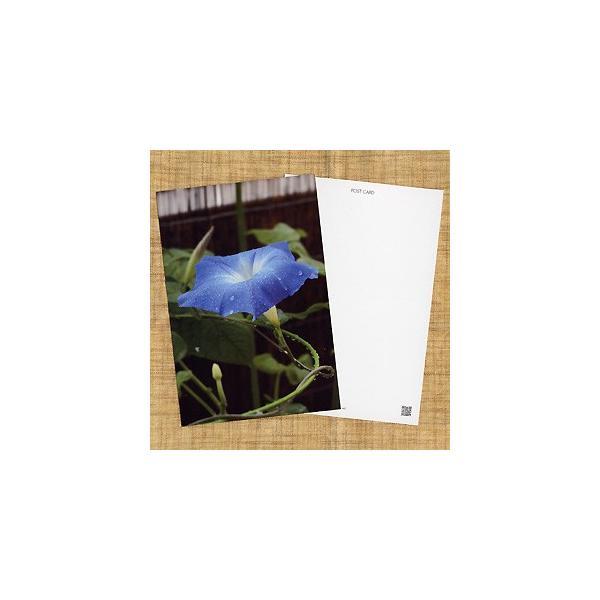 花のポストカード アサガオ(青)|horiya-studio