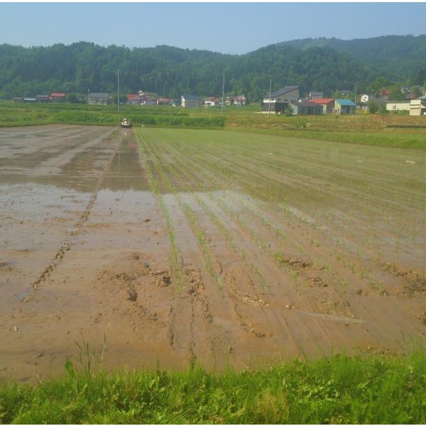 平成30年産長野県飯山産コシヒカリ白米 500グラム×2個 送料無料|hoteiya-net|03
