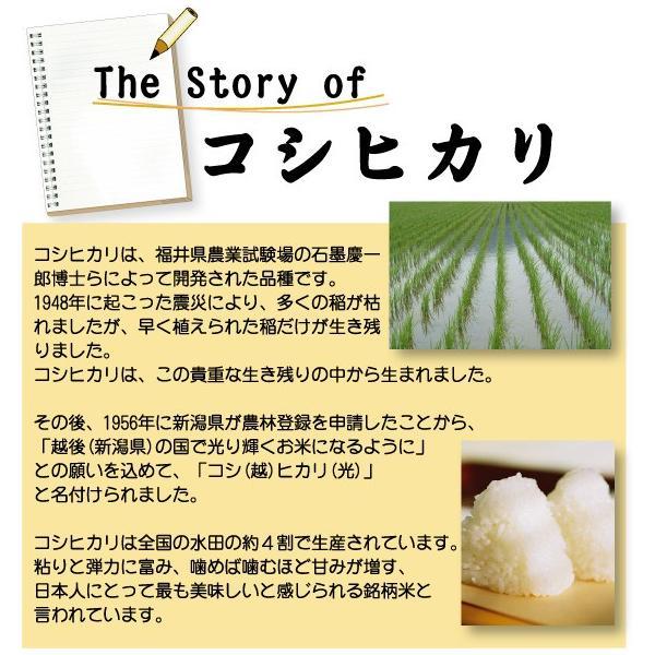 無洗米 10kg 5kg×2袋 三重県産 コシヒカリ 29年産 多気農協 ぎんひめ限定 送料無料|hseason|05
