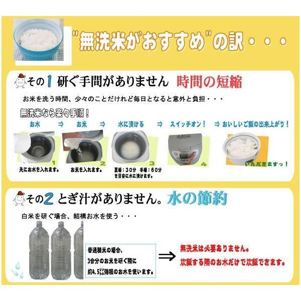 新米 5kg 無洗米 新潟県産 コシヒカリ 29年産 送料無料|hseason|06