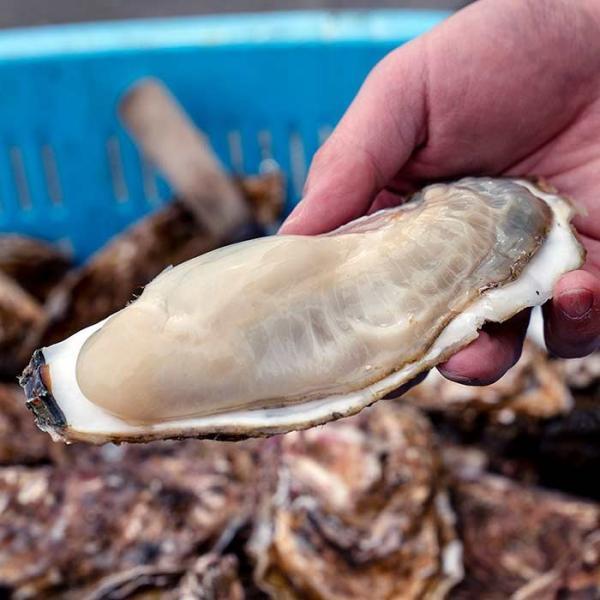 大槌の牡蛎燻製《柚子ドレッシング》ミニ  〜素材も燻製材、燻製器も全部国産。迫力の大カキを絶品スモークに hyotanjima-tomaya 06